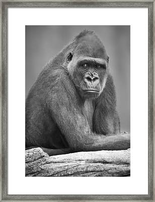 Monkey Framed Print by Darren Greenwood