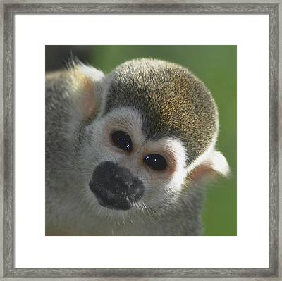 Monkey Face Framed Print by Danielle Del Prado