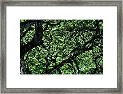 Monkey Heaven Framed Print by Cliff Barnes