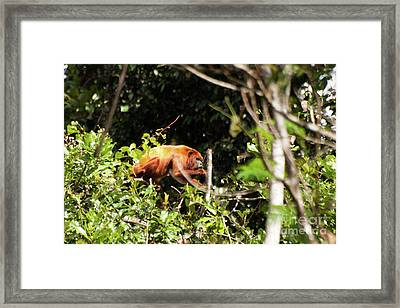 Framed Print featuring the photograph Monkey In The Trees by John Burns