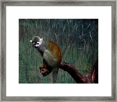 Monkey Framed Print by Maria Urso