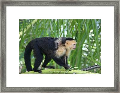 Monkey On My Back Framed Print by Debra     Vatalaro
