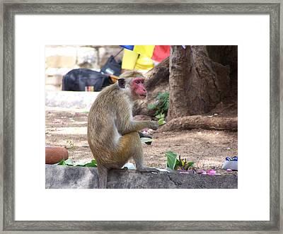 Monkey See Monkey Do Framed Print by Steve Huang
