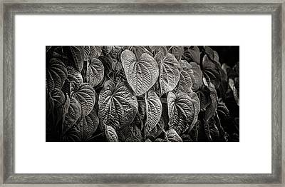 Monkey Vine Framed Print