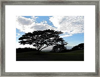 Monkeypod Tree In Maui Framed Print by Kirsten Giving
