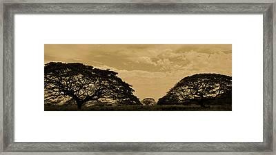 Monkeypod Trees Framed Print by Trina Talmon