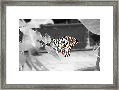 Monochromatic Butterfly Framed Print