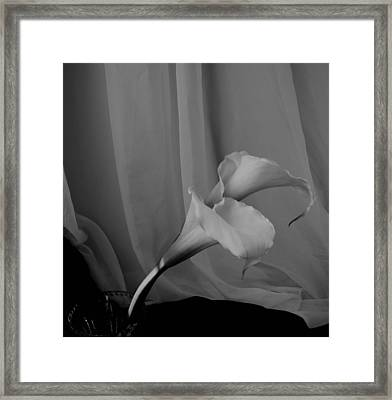 Monochrome Calla Lilies Framed Print by Lynnette Johns