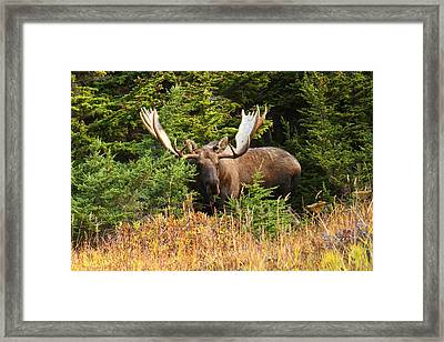 Framed Print featuring the photograph Monster In The Hemlocks by Doug Lloyd