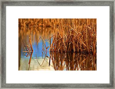 Montana Peace Pond Framed Print by William Kelvie