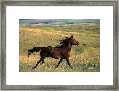 Montana Traveler  Framed Print by Alan and Sandy Carey and Photo Researchers