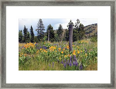 Montana Wildflowers Framed Print by Athena Mckinzie