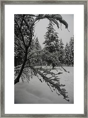 Montana Winter Framed Print by G Humeston