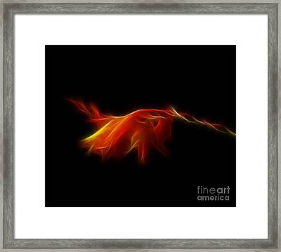 Framed Print featuring the photograph Montbretia by Lynn Bolt