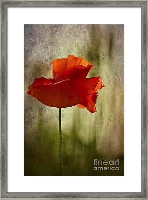 Moody Poppy. Framed Print by Clare Bambers - Bambers Images
