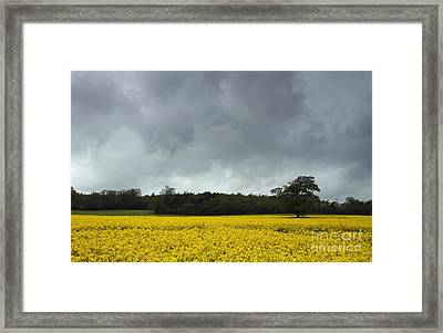 Moody Rapeseed Field Framed Print by Urban Shooters