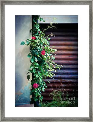 Moody Roses Framed Print by Silvia Ganora