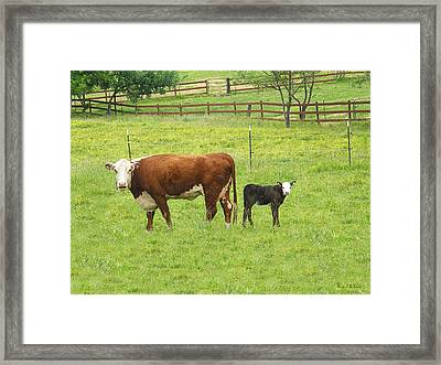 Mooma And Calf Framed Print