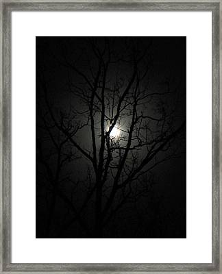 Moon Branches Framed Print by Jennifer Compton