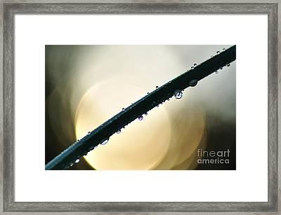 Moon Drops Framed Print by Kaye Menner