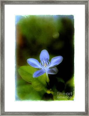 Moon Flower Framed Print by Judi Bagwell