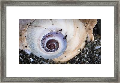 Framed Print featuring the photograph Moon Shell Is A Woman by Ronda Broatch