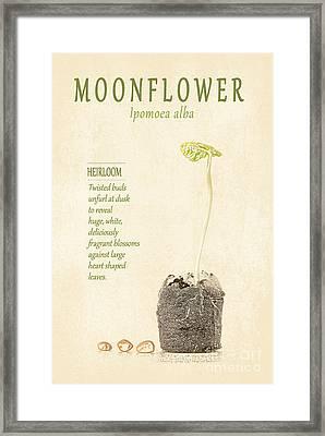 Moonflower Vine Seedling  Framed Print by Anne Kitzman
