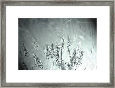 Moonlight Glow Framed Print by Terrie Taylor