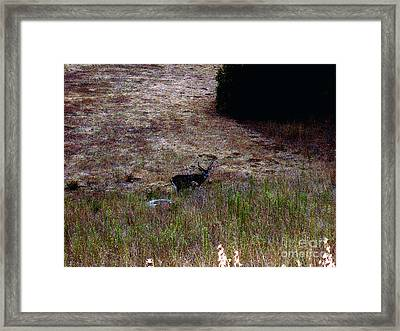 Moonlit Buck Framed Print