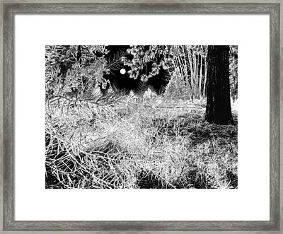 Moonlit Frost Framed Print by Will Borden