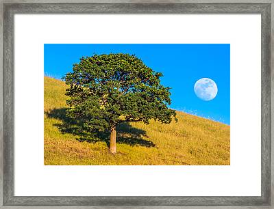 Moonrise Behind Oak Tree Framed Print by Marc Crumpler