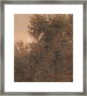 Moonrise In The Orchard Framed Print by Peter  Campbell