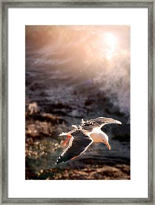 Framed Print featuring the photograph Moonstone Beach Seagull by Michael Rock
