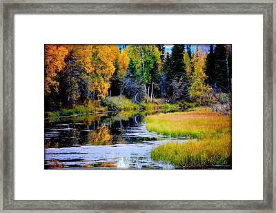 Moose Country Framed Print