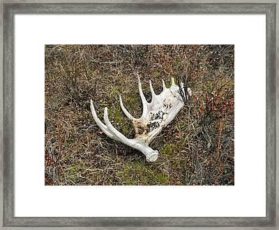 Moose Shed Framed Print by Adam Owen