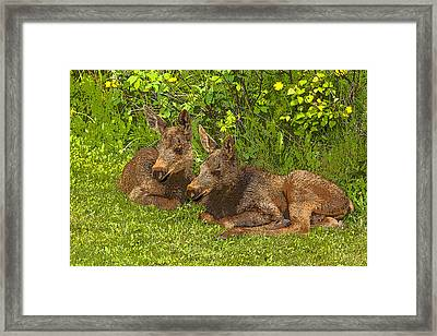 Moose Twins- Abstract Framed Print by Tim Grams