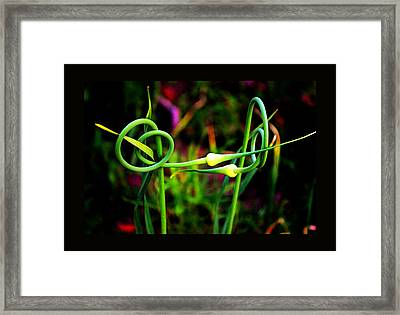 Framed Print featuring the photograph More Divine Garlic by Susanne Still