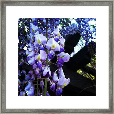More Flowers, Why Are So Many Of My Framed Print
