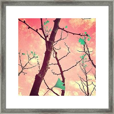 More Fun Framed Print by Courtney Haile