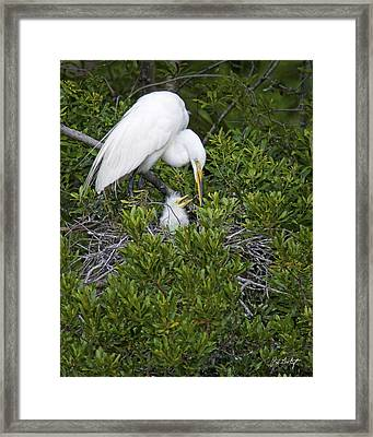 More Mommy Framed Print by Phill Doherty