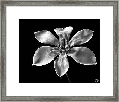 Morea In Black And White Framed Print by Endre Balogh