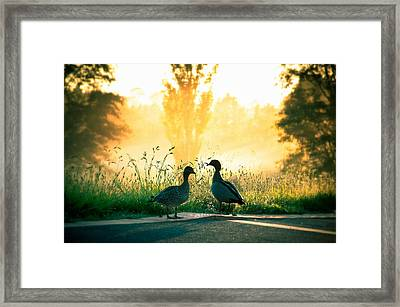 Morning Banter Framed Print by Max Photography