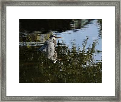 Framed Print featuring the photograph Morning Bath by Steven Sparks