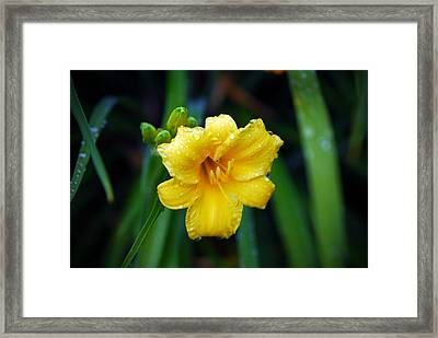 Morning Beauty Framed Print by Mary Timman