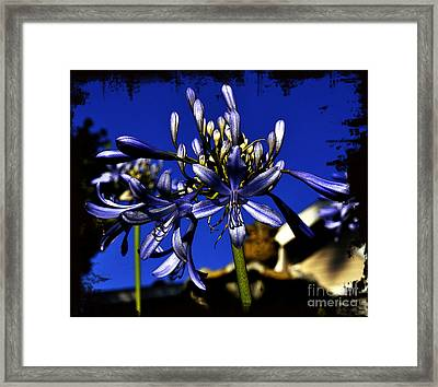 Framed Print featuring the photograph Morning Blooms by Clayton Bruster