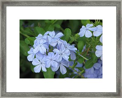 Framed Print featuring the photograph Morning Blues by John Glass