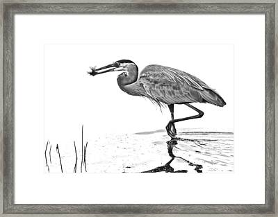 Morning Catch Framed Print by Don Durfee