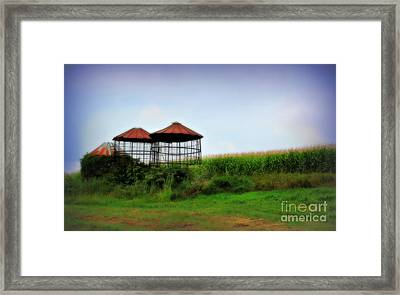 Morning Corn Framed Print by Perry Webster