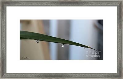 Morning Dew 2 Framed Print by Lorraine Louwerse