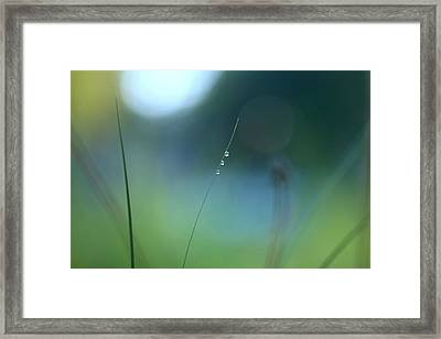 Morning Dew And Spirit Framed Print by Pan Orsatti